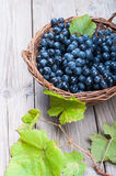 Black grapes in a basket Stock Images
