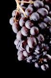 Black grapes on black stock photography