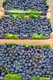 Black grapes in crates. Stack of fresh, black grapes in wooden crates, ready for sale Stock Photo