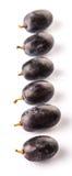 Black Grapes Fruit IV Royalty Free Stock Photography