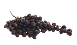Black grapes isolated. Stock Photos