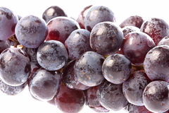 Black Grapes Isolated Stock Image