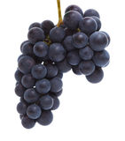 Black grapes isolated Royalty Free Stock Images