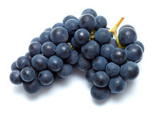 Black grapes isolated. Bunch of black vine grapes isolated on white Royalty Free Stock Image