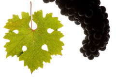 Black grapes and leaf Stock Photo