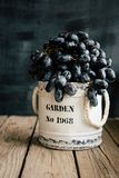Black grapes in old jar on wooden table and dark background stock image
