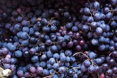 Black grapes Royalty Free Stock Photography