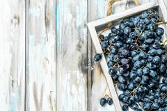 Black grapes on a tray. On a rustic background royalty free stock photography