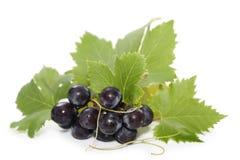 Black grapes. On white background Stock Photos