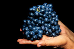 Black grapes in woman hand on black Stock Photography
