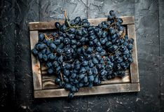 Black grapes on a wooden tray. On black rustic background stock image
