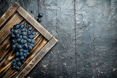 Black grapes on a wooden tray. On black rustic background stock photography
