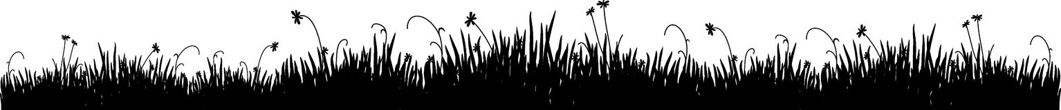 Black grass. Black silhouette of a meadow grass on a white background Royalty Free Stock Image
