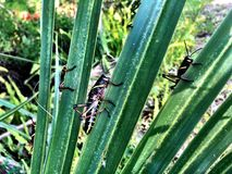 grasshopper on a palm tree stock photo