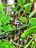 grasshopper on a palm tree stock photos