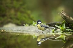Black and Gray Bird on Body of Water Stock Images