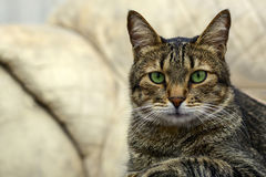 Black gray cat with green eyes staring in camera. Play, sleep close-up portrait stock image