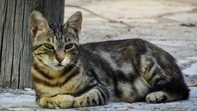 Black and Gray Short Coated Cat Royalty Free Stock Photo