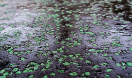Black And Green Asphalt Royalty Free Stock Images