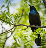 Black and Green Bird on Branch of Tree during Daytime Stock Photos