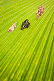 Black-green butterfly on the green palm tree leaf Stock Photography