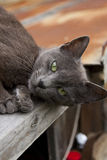 Black green-eyed cat Stock Photography