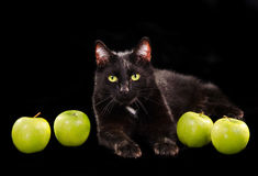 Black green-eyed cat among green apples Royalty Free Stock Photos