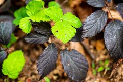 Black and Green stock image
