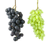 Black and green grape  on white background. Two grape bunches hanging in the air Royalty Free Stock Photography