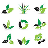 Black and Green Leaves  on white Royalty Free Stock Photo