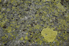 Black and green lichens Stock Images