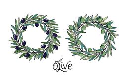Black and green olive branches wreath.  Decoration with olive fruits, branches, leaves. Stock Image