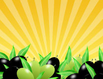 Black and green olives Stock Photo