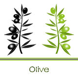 Black and Green Olives Branch Stock Photo
