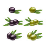 Black Green Olives Branches Leaves Isolated White Royalty Free Stock Photography