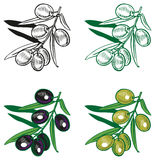Black and green olives drawing Royalty Free Stock Image