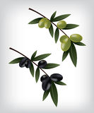 Black and green olives illustration Royalty Free Stock Photography