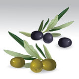 Black and green olives isolated Stock Image