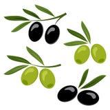 Black and green olives. Vector illustration royalty free illustration