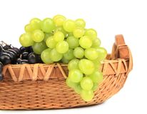 Black and green ripe grapes in basket. Royalty Free Stock Photos