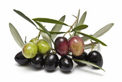 Black and greenolives on the branch. Stock Image
