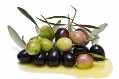 Black and greenolives on olive oil. Stock Images