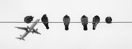Black and Grey Birds on Wire during Daytime Stock Photography
