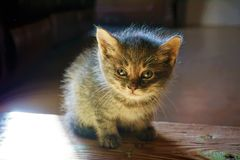 Black and Grey Kitten Stock Images