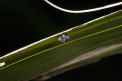 Black and grey ladybug on a leaf Stock Image