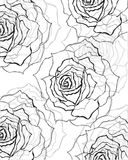 Black,grey rose background Royalty Free Stock Images