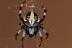 Black and Grey Spider Stock Photos