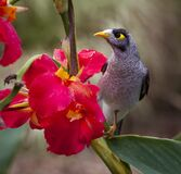 Black Grey White Yellow Bird Near on Pink Petal Flower Stock Image
