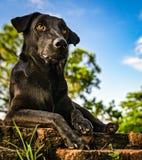 Black guard dog Royalty Free Stock Photography