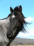 black hästwhite Royaltyfri Foto